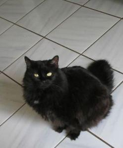 Sabrina, our fluffy girl (also called Beanie)